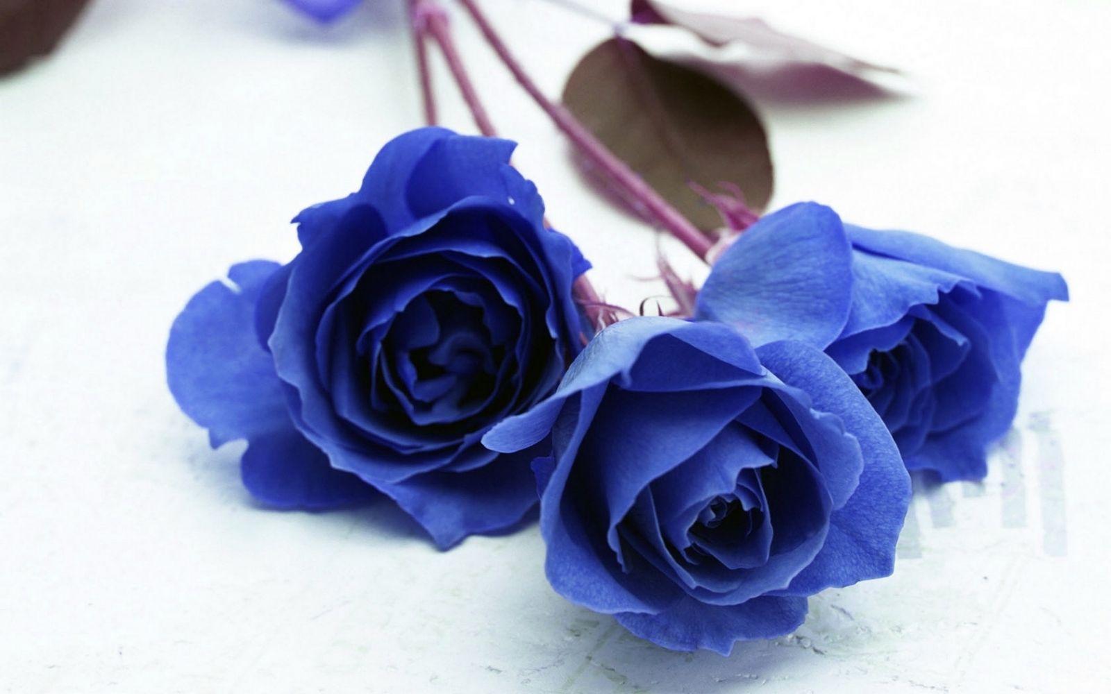 Купить цветы в астане розы #13