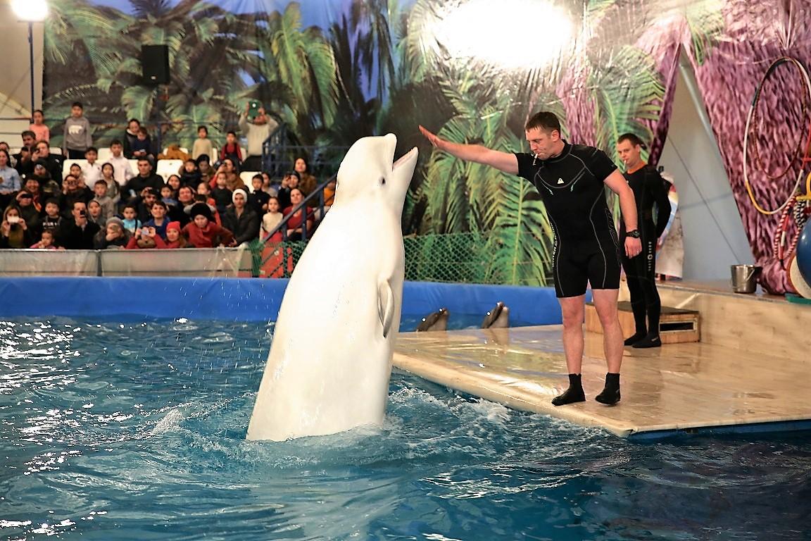 города миновала фото из дельфинария красноярск отзывы