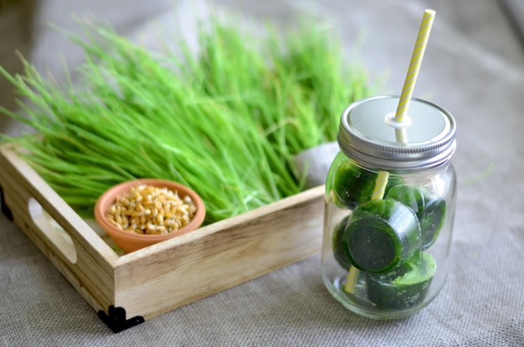 fb1ec21e3115 О производстве микрозелени и полезной еде - Все о еде   WEproject